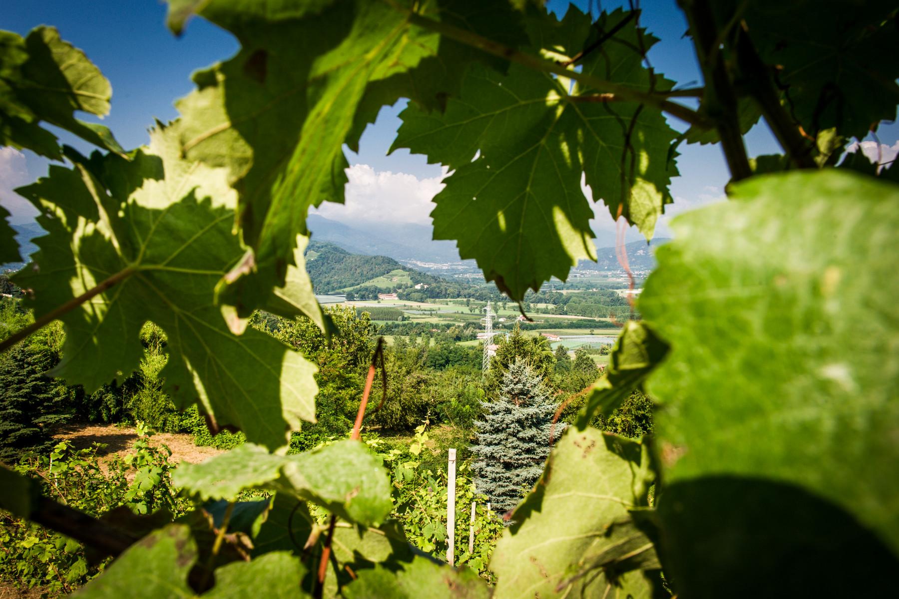 Villa in Vendita a Saluzzo: 5 locali, 900 mq - Foto 6