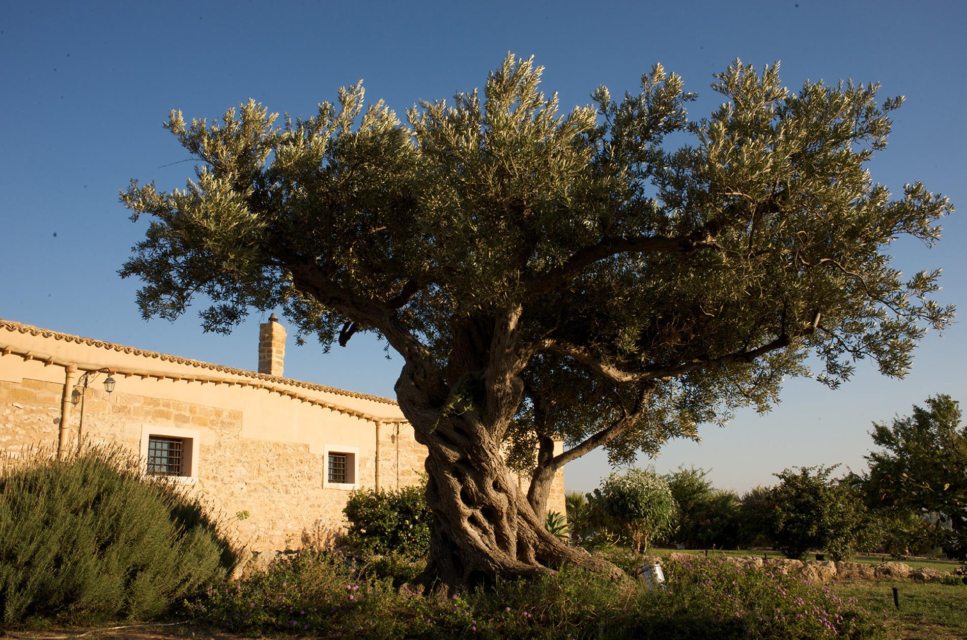 Villa in Vendita a Menfi: 5 locali, 4400 mq - Foto 12