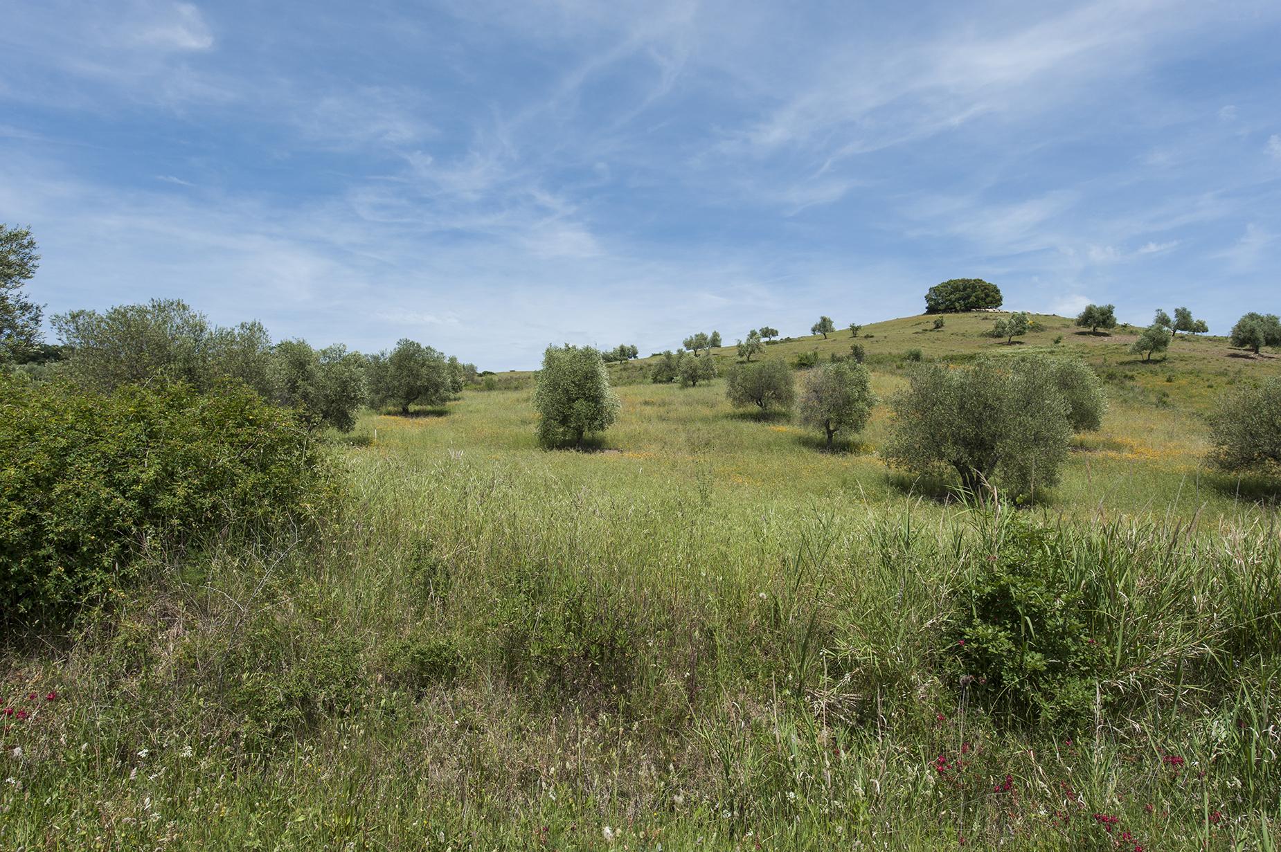 Terreno residenziale in Vendita a Roccalbegna: 25200 mq