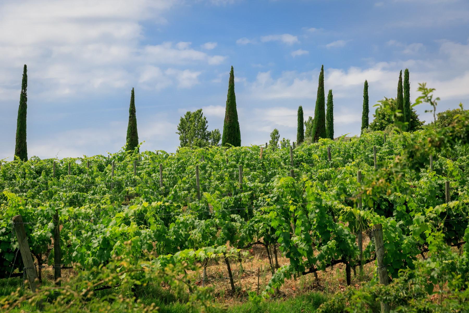 Villa in Vendita a Montepulciano: 5 locali, 2830 mq - Foto 2