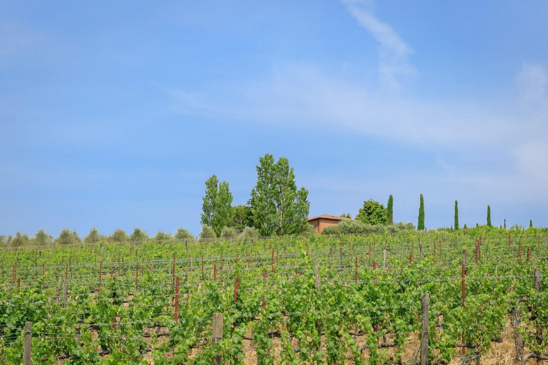 Villa in Vendita a Montepulciano: 5 locali, 2830 mq - Foto 7