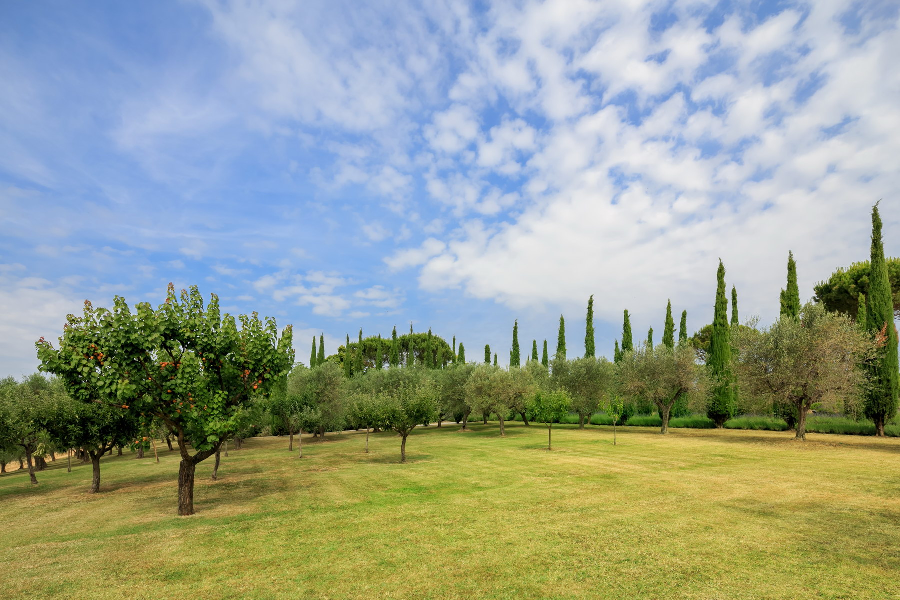 Villa in Vendita a Montepulciano: 5 locali, 2830 mq - Foto 8