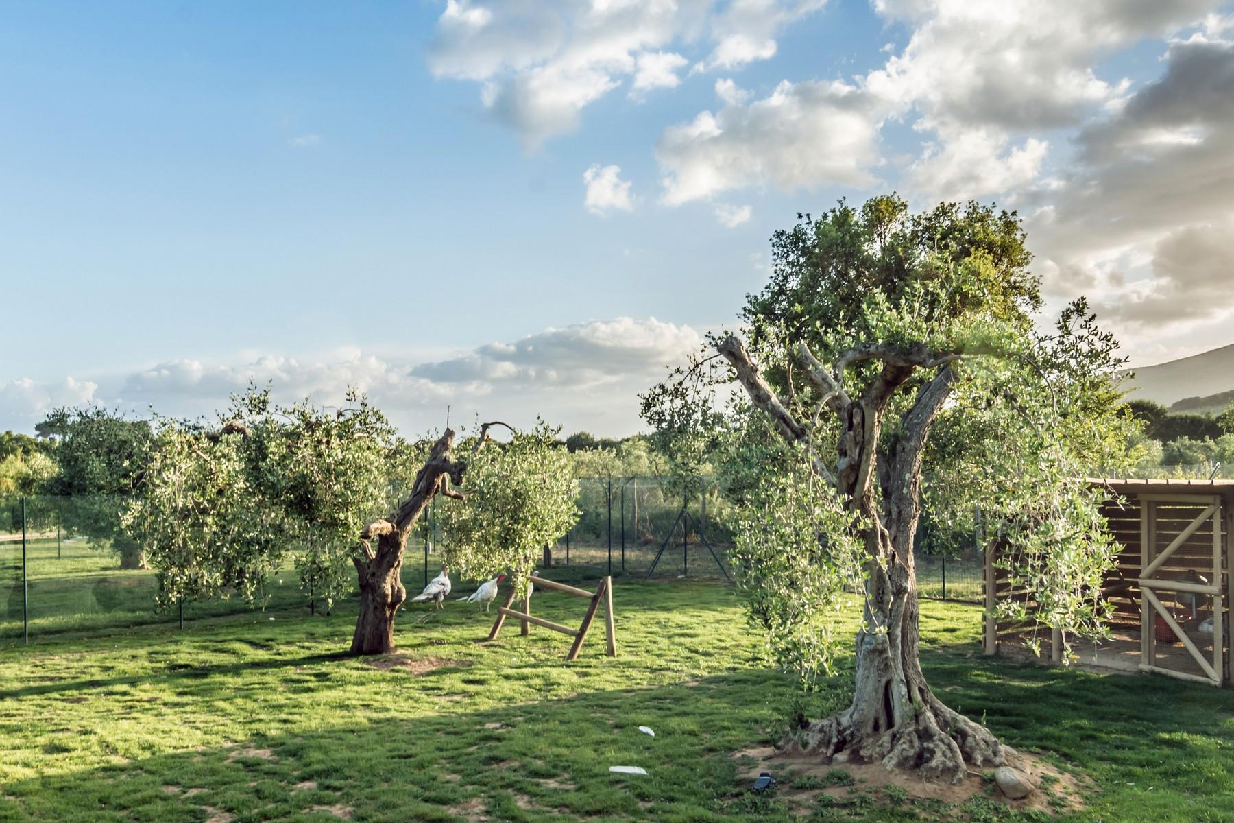 Villa in Vendita a Castiglione Della Pescaia: 5 locali, 850 mq - Foto 19