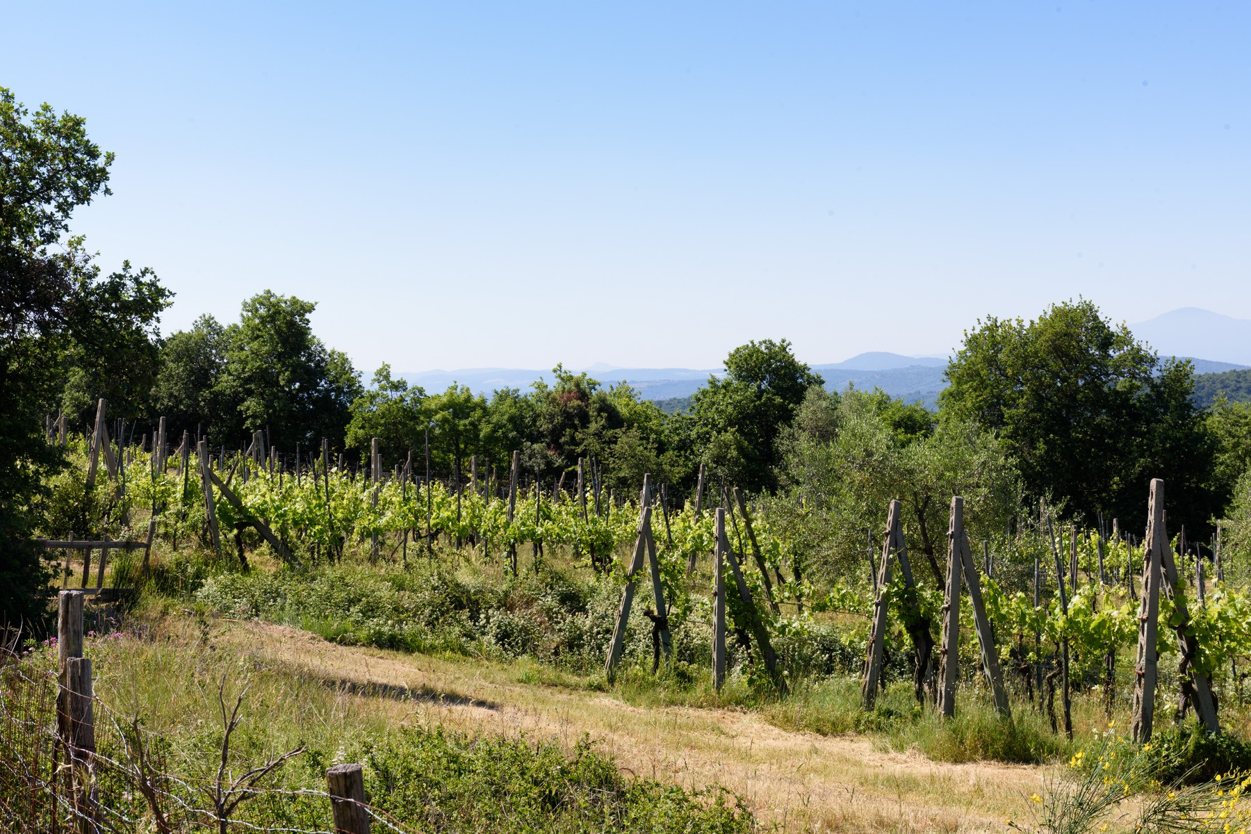 Rustico in Vendita a Monte San Savino: 5 locali, 370 mq - Foto 12