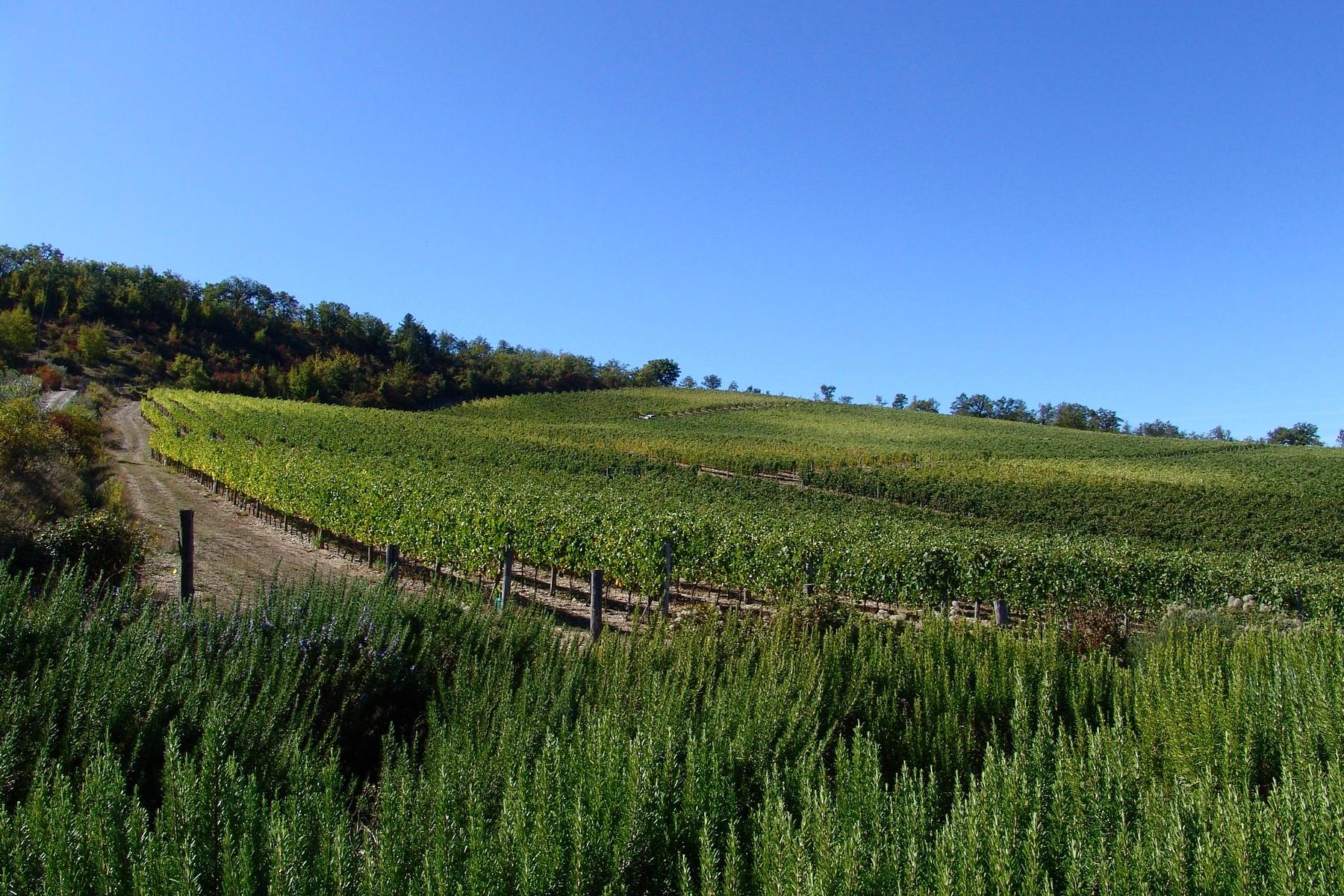 Rustico in Vendita a Gaiole In Chianti: 5 locali, 1380 mq - Foto 6