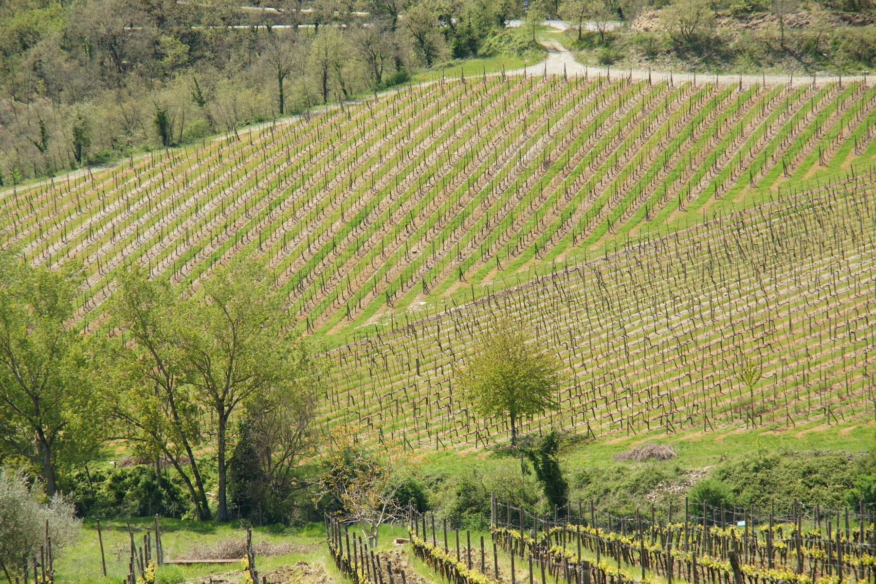 Rustico in Vendita a Gaiole In Chianti: 5 locali, 1380 mq - Foto 8