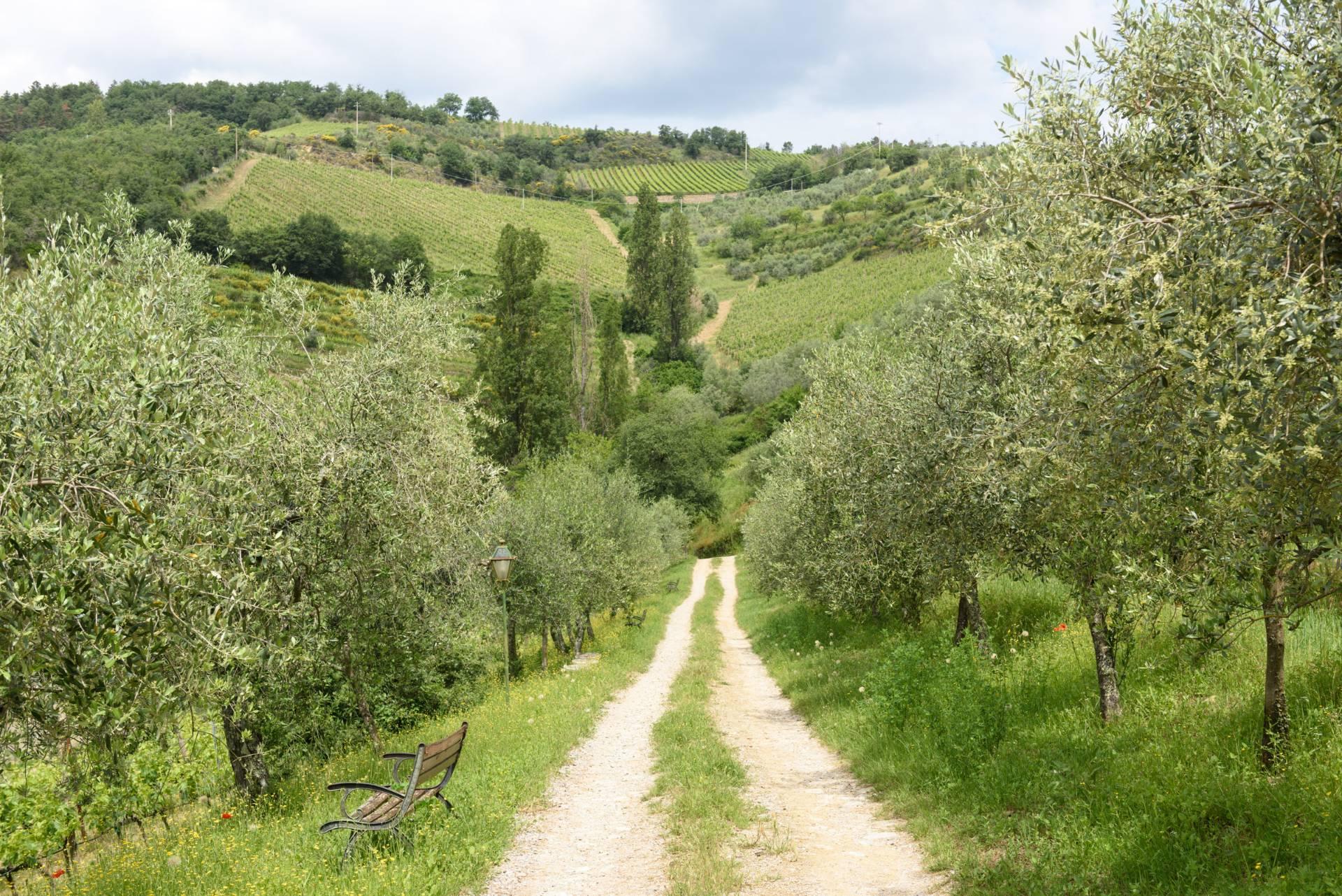 Rustico in Vendita a Gaiole In Chianti: 5 locali, 2170 mq - Foto 14
