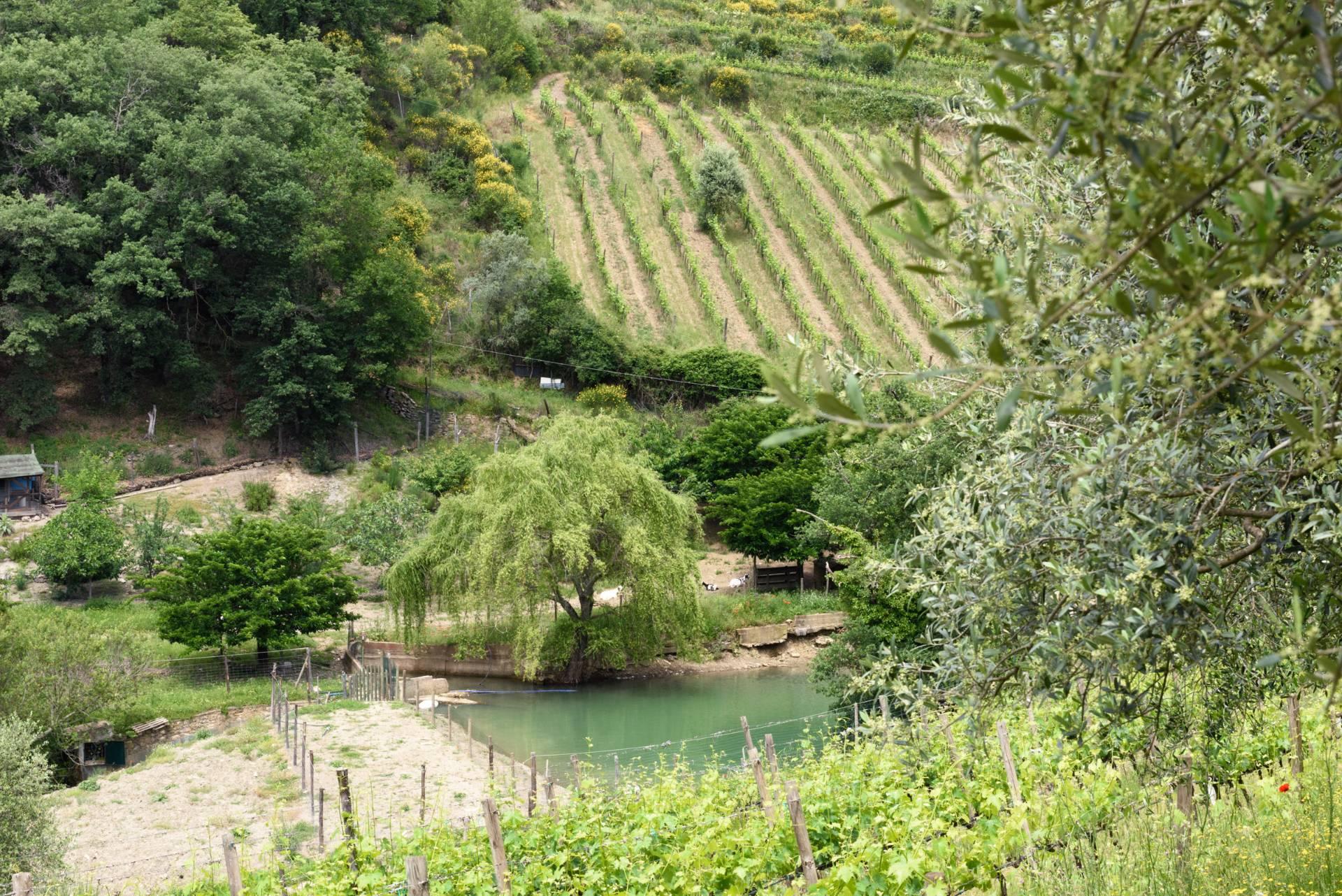 Rustico in Vendita a Gaiole In Chianti: 5 locali, 2170 mq - Foto 15