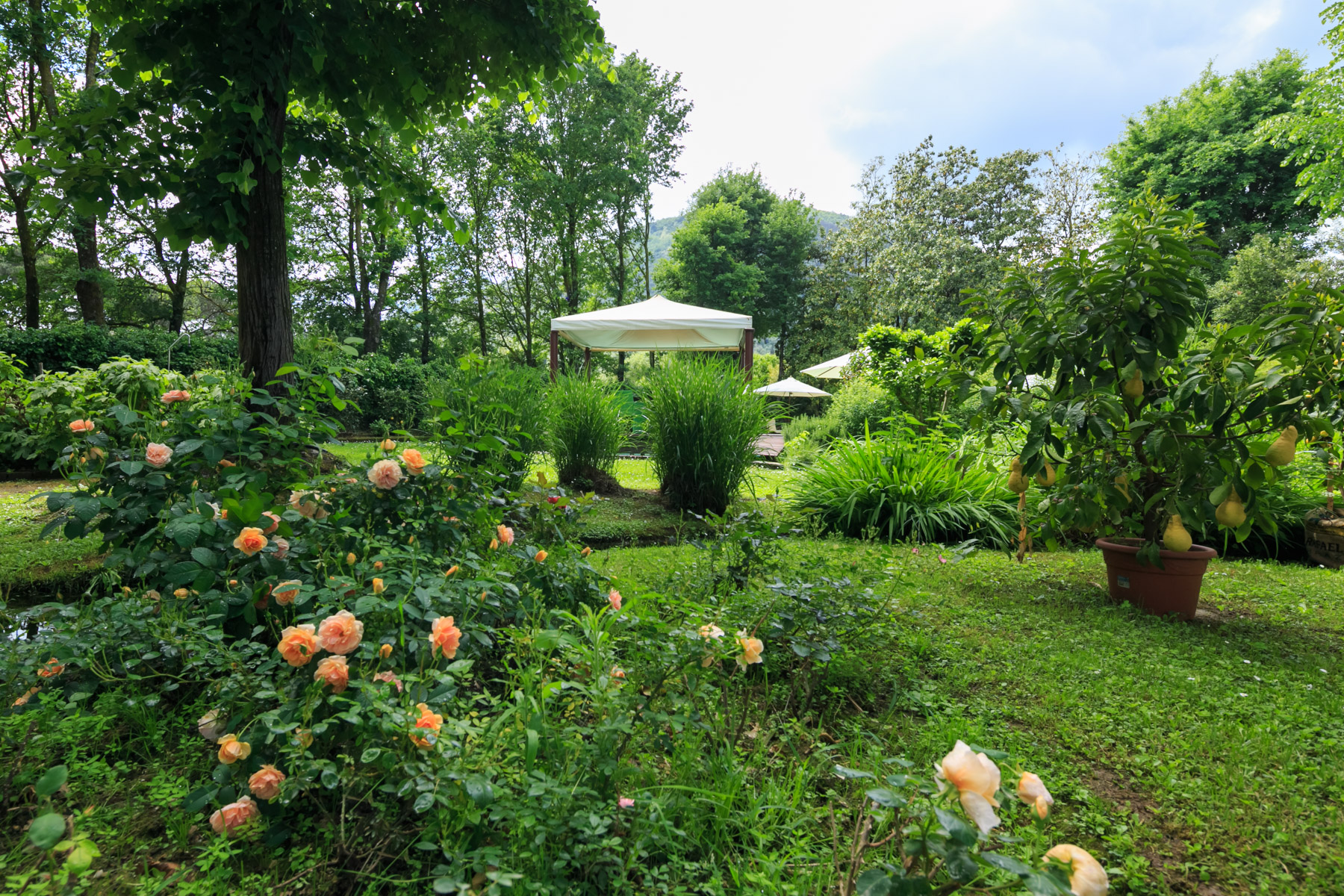 Villa in Vendita a Lucca: 5 locali, 700 mq - Foto 12