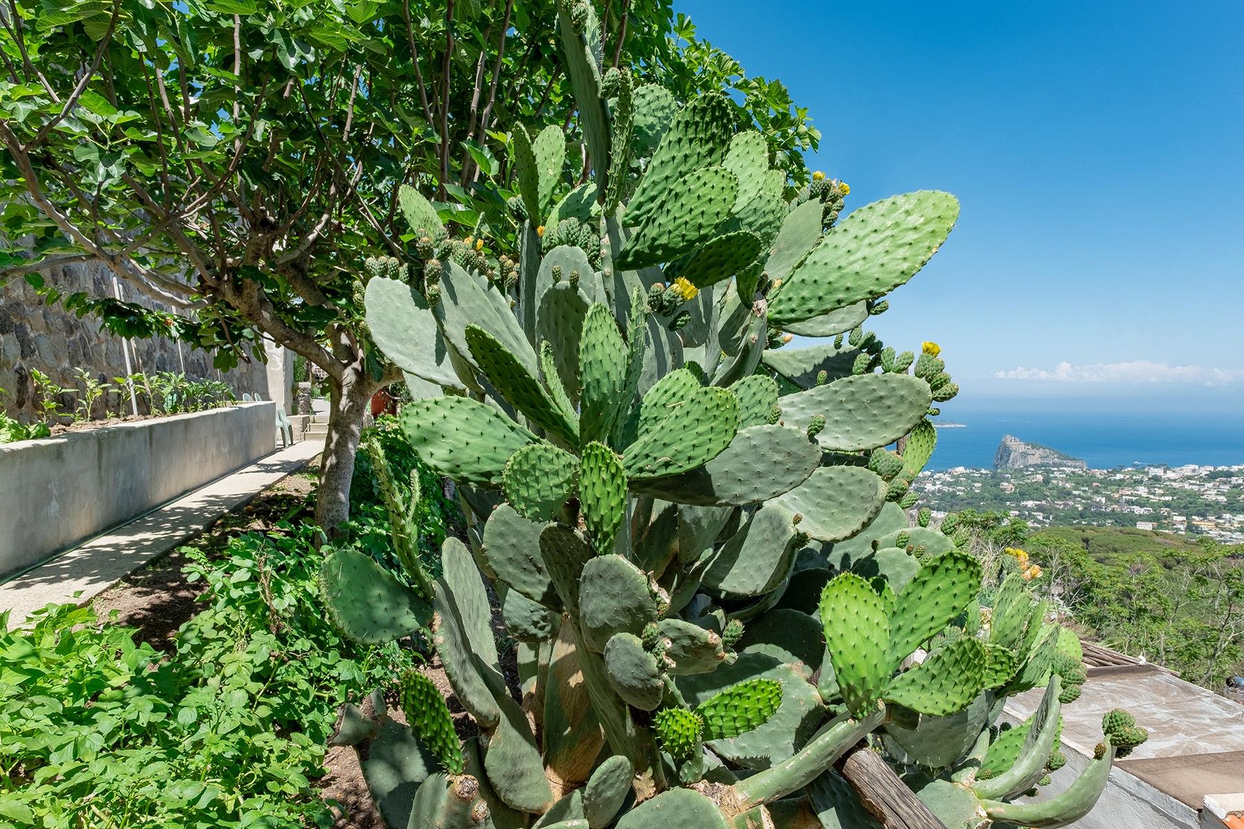 Villa in Vendita a Ischia: 5 locali, 138 mq - Foto 11