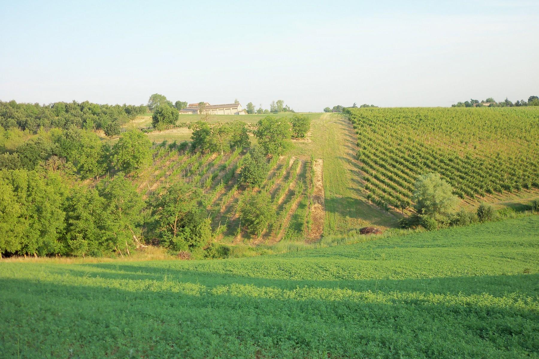 Rustico in Vendita a Castelvetro Di Modena: 5 locali, 3100 mq