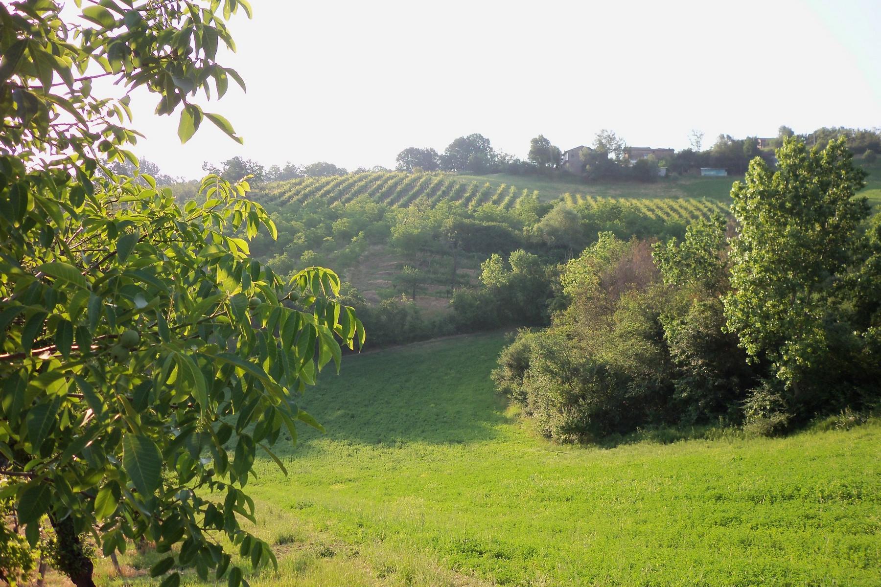 Rustico in Vendita a Castelvetro Di Modena: 5 locali, 3100 mq - Foto 2