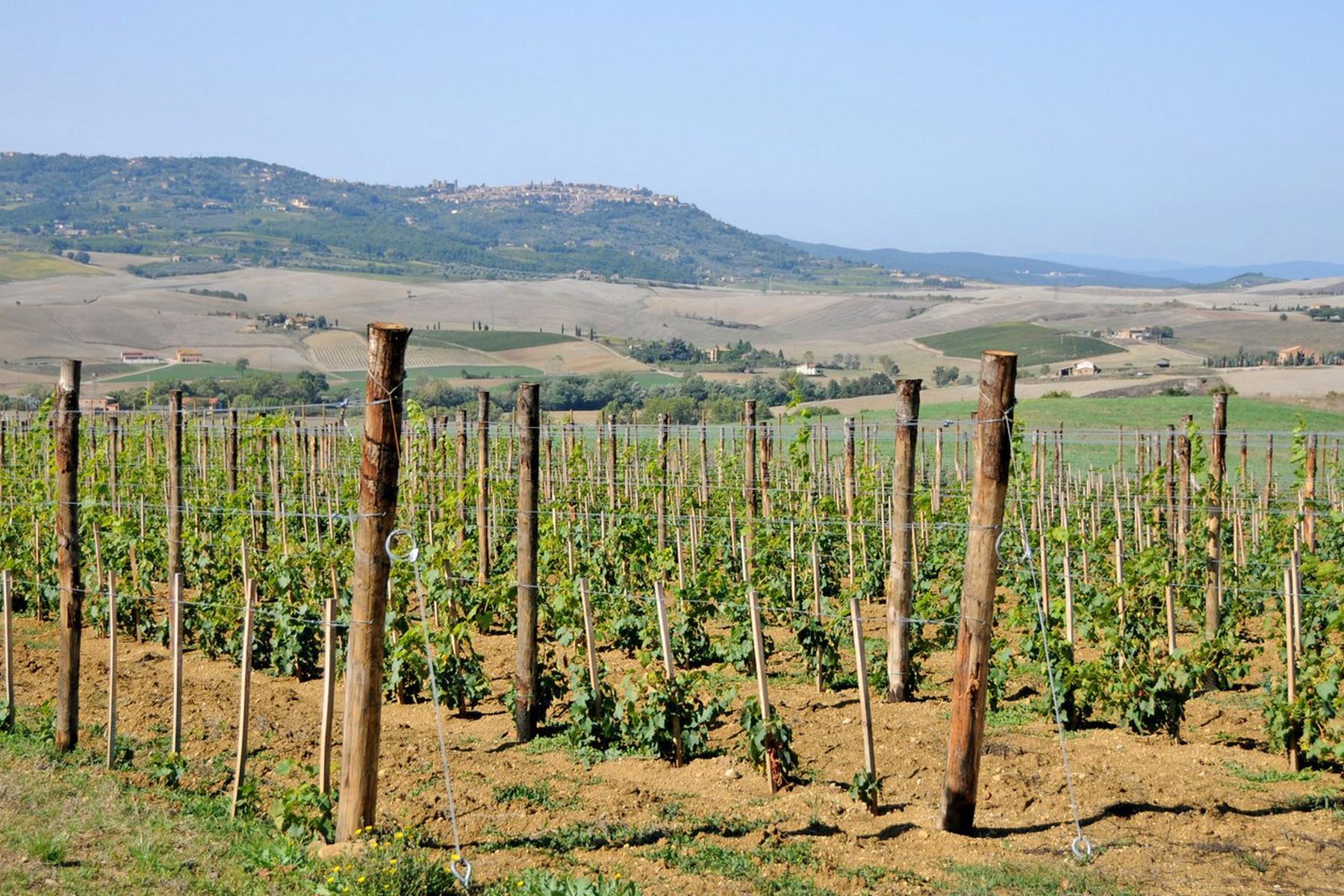 Villa in Vendita a Torrita Di Siena: 5 locali, 8000 mq