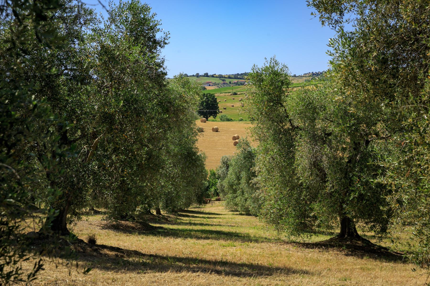 Villa in Vendita a Magliano In Toscana: 5 locali, 723 mq - Foto 25