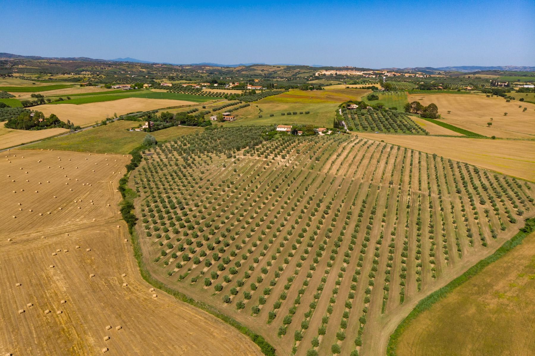 Villa in Vendita a Magliano In Toscana: 5 locali, 723 mq - Foto 28