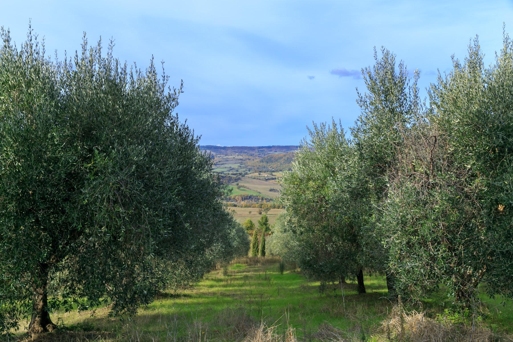 Rustico in Vendita a Manciano: 5 locali, 500 mq - Foto 28