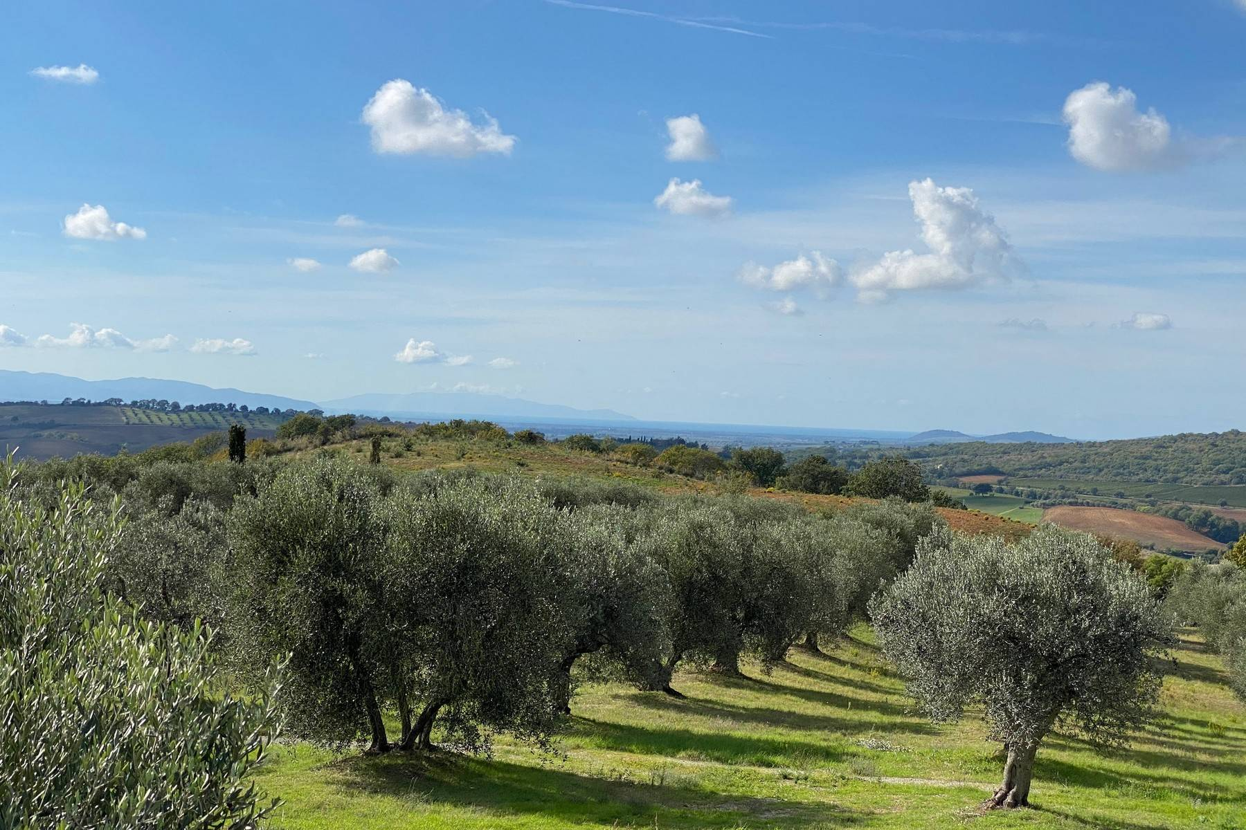 Rustico in Vendita a Magliano In Toscana: 5 locali, 1044 mq - Foto 29