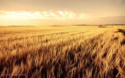 Terreno Agricolo in Vendita a Carbonera