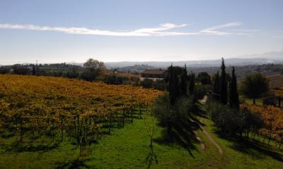 Azienda Agricola, Podere in Vendita a Controguerra
