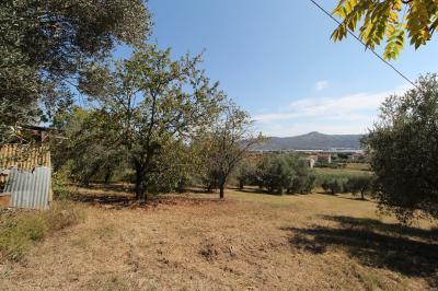 Terreno Agricolo (con / Senza Piccolo Prefabbricato) in Vendita a Monteprandone