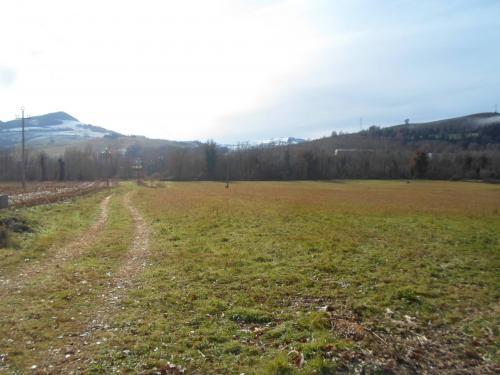 Terreno Agricolo in Vendita a Montelparo
