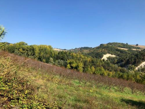 Terreno Agricolo (con / Senza Piccolo Prefabbricato) in Vendita a Montelparo