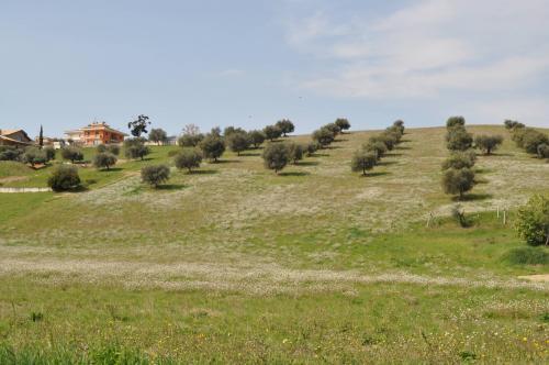 Terreno Agricolo (con / Senza Piccolo Prefabbricato) in Vendita a San Benedetto del Tronto