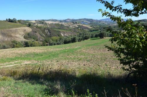 Azienda Agricola, Podere in Vendita a Castignano