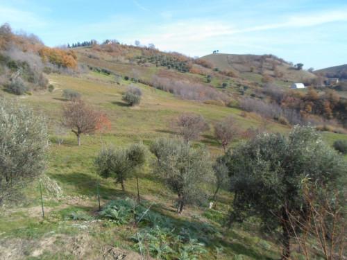 Terreno Agricolo (con / Senza Piccolo Prefabbricato) in Vendita a Ascoli Piceno