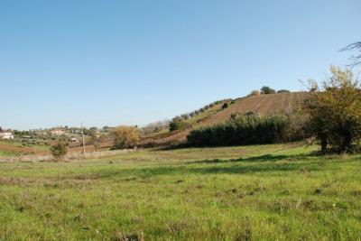 Terreno Agricolo (con / Senza Piccolo Prefabbricato) in Vendita a Controguerra