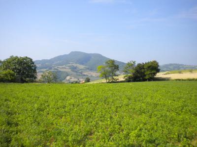 Terreno Agricolo (con / Senza Piccolo Prefabbricato) in Vendita a Montedinove