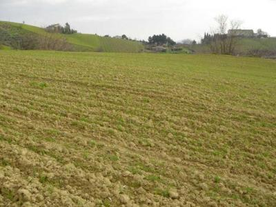 Terreno Agricolo (con / Senza Piccolo Prefabbricato) in Vendita a Acquaviva Picena