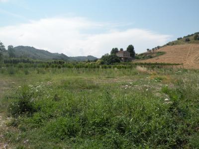 Terreno Agricolo (con / Senza Piccolo Prefabbricato) in Vendita a Cupra Marittima