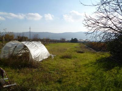 Terreno Agricolo (con / Senza Piccolo Prefabbricato) in Affitto a Colli del Tronto