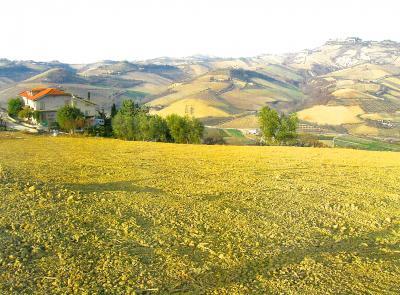 Azienda Agricola, Podere in Vendita a Ripatransone