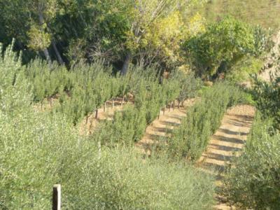Terreno Agricolo (con / Senza Piccolo Prefabbricato) in Vendita a Monsampolo del Tronto