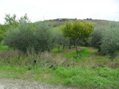 Terreno Agricolo (con / Senza Piccolo Prefabbricato) in Vendita a Castel di Lama