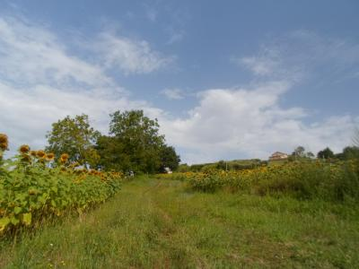 Terreno Agricolo (con / Senza Piccolo Prefabbricato) in Vendita a Monte Rinaldo