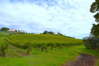 Terreno Agricolo (con / Senza Piccolo Prefabbricato) in Vendita a Colli del Tronto