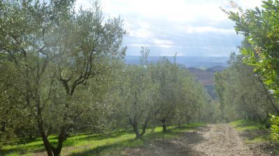 Terreno Agricolo (con / Senza Piccolo Prefabbricato) in Vendita a Offida