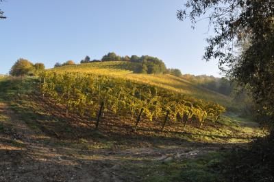 Terreno Agricolo (con / Senza Piccolo Prefabbricato) in Vendita a Ripatransone