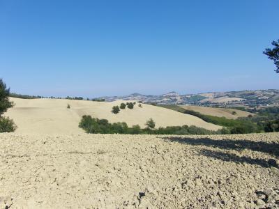Terreno Agricolo in Vendita a Rapagnano