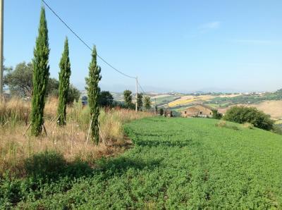 Terreno Agricolo in Vendita a Monte San Pietrangeli
