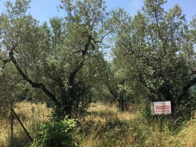 Terreno Agricolo in Vendita a Casaprota