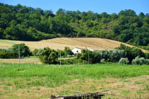 Terreno Agricolo in Vendita a Campofilone