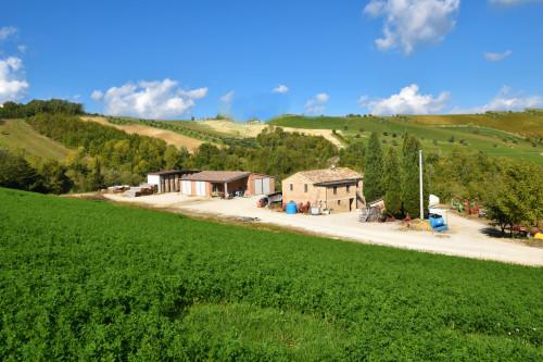 Azienda Agricola in Vendita a Castignano