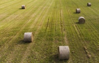 Terreno Agricolo in Vendita a Ravenna