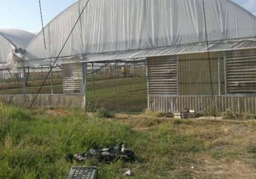 Terreno Agricolo in Vendita a Bonifati