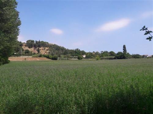 Terreno Agricolo in Vendita a Rimini