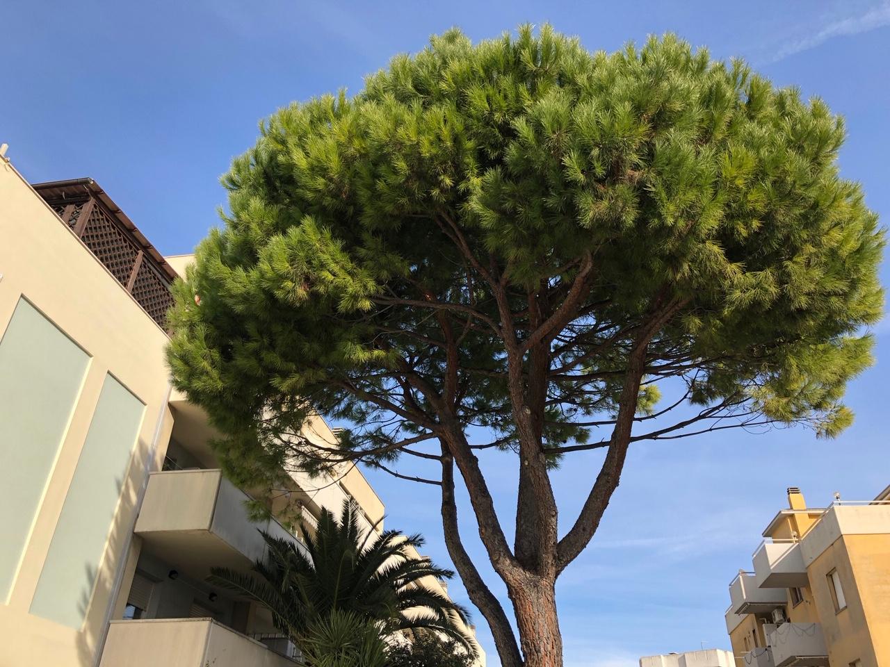 Negozio / Locale in affitto a Montemarciano, 9999 locali, zona Località: MarinadiMontemarciano, prezzo € 160.000 | CambioCasa.it